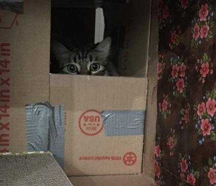 bored in box
