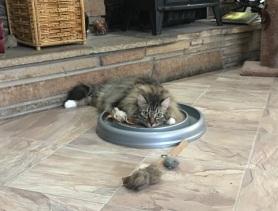 bored with catnip