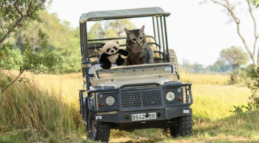 driving jeep safari