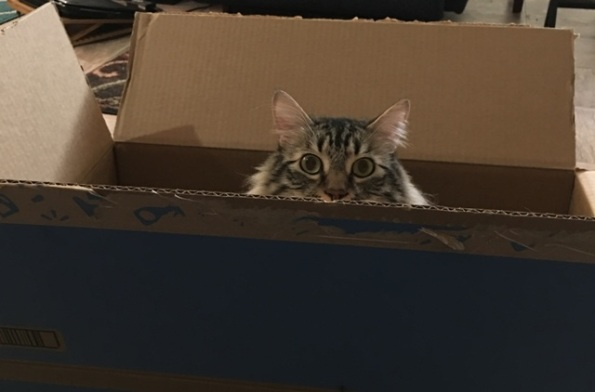 peeking out of box 2