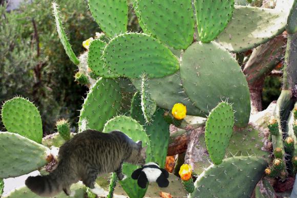 at bottom of cactus small