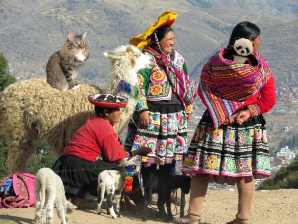 Foster on llama small2