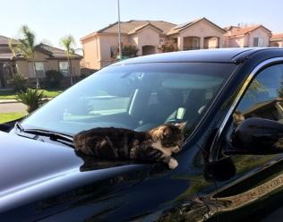 on car