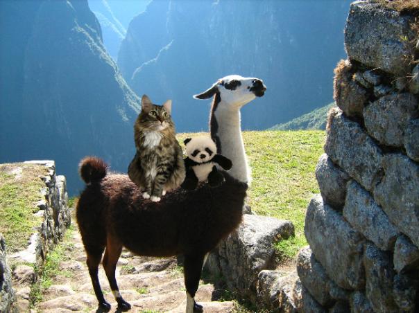riding a llama small