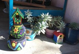 ny succulents