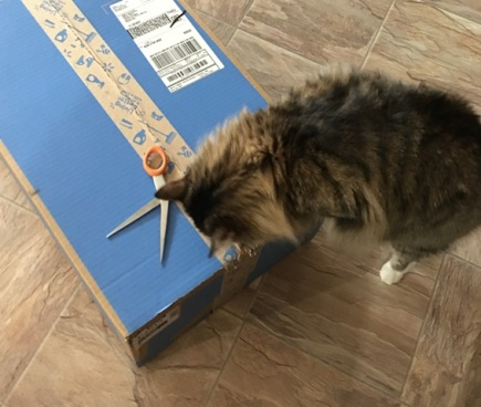 seeing box