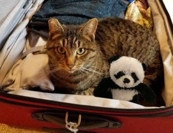 benji and panda in suitcase sm