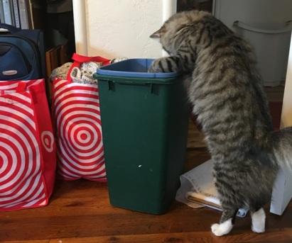 looking in wastebasket