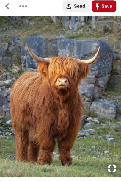 yak from Pinterest