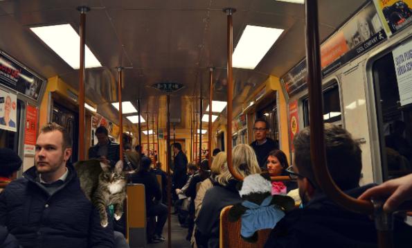 bus ride 2 sm