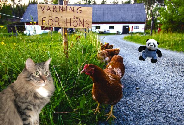 hen warning small