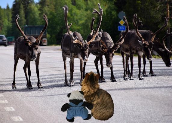 looking at reindeer sm