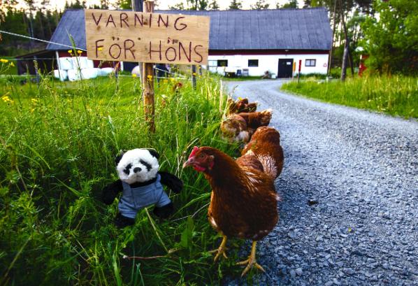 panda talking to hen small