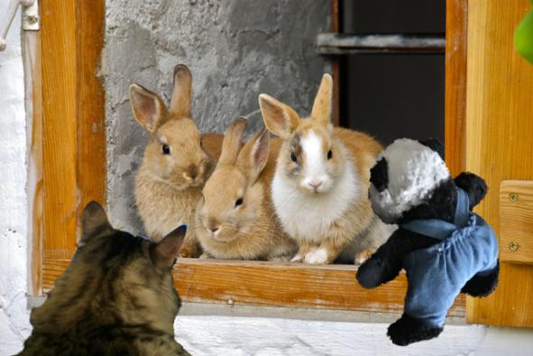 seeing rabbits sm