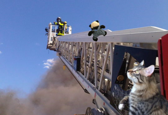 a panda climbing ladder