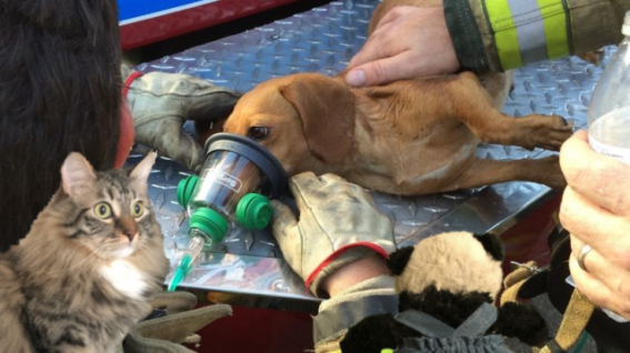 a rescuing dog