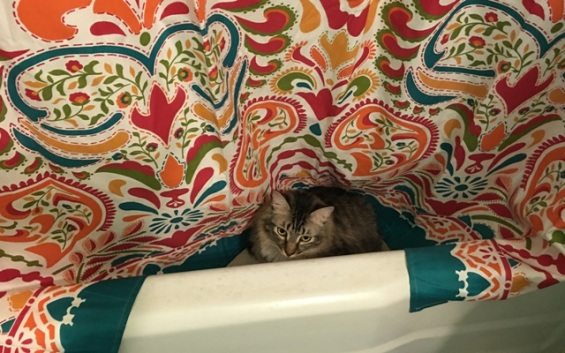 behind shower curtain