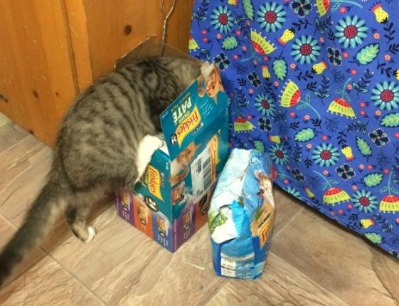 climbing in cat food box