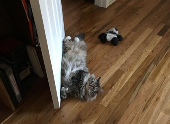 upside down by door