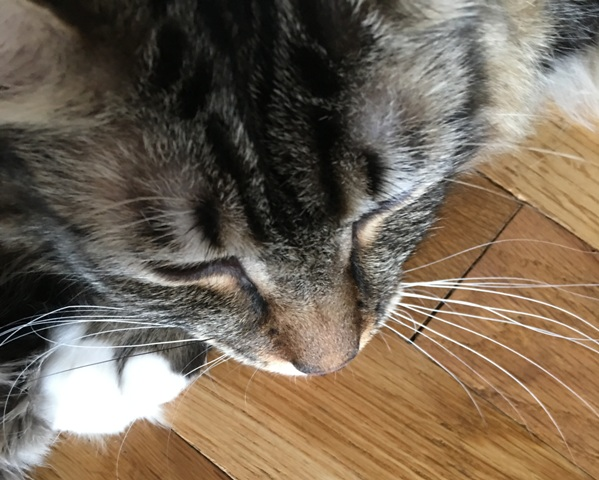 whiskers close up
