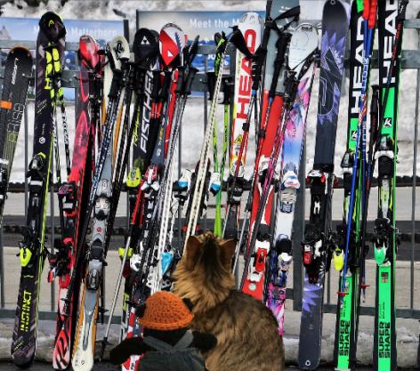 a getting skiis