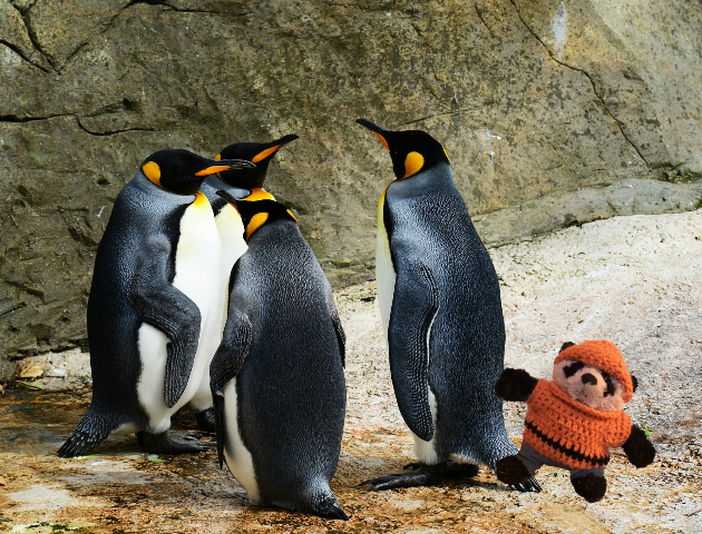 a panda tapping penguin