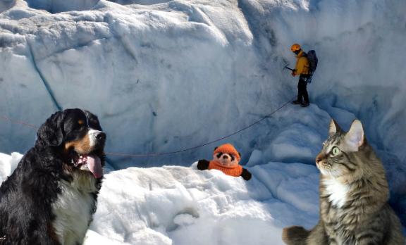 crevasse rescue dog
