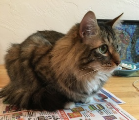 Foster on table with newspaper