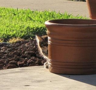 stripey by pot